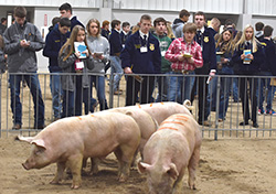 Nearly 500 students attend district livestock judging contest at Northeast
