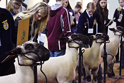 Over 500 students attend district livestock judging contest at Northeast